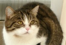 Über die Hälfte der Fundtiere sind Katzen. Bild: Dagny E. Klemm