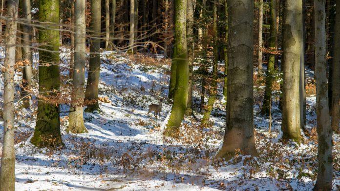 Symbolbild Wald (pixabay/HoliHo)