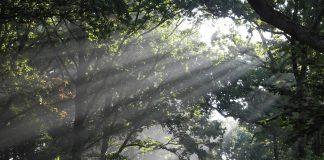 Symbolbild Wald (pixabay/Elwitsch)